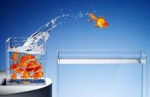 Competencias y emprendedores